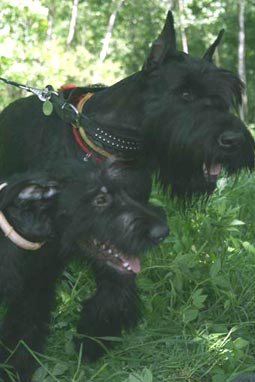 27 июня 2007 выставка собак пенза: